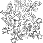 Printable Flower Coloring Pages Best Of Photography Roses Flowers Coloring Page
