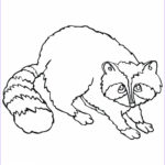 Printable Free Coloring Pages Inspirational Gallery Raccoon Coloring Pages to and Print for Free
