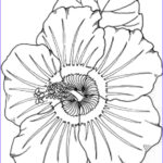 Printables Free Coloring Pages New Photos Luau Coloring Pages
