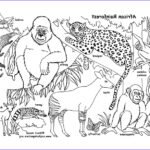 Rainforest Coloring Page Beautiful Photos Habitats Of The World Activity
