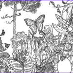 Rainforest Coloring Page Best Of Photos Butterfly Rainforest Insect Coloring Page Download