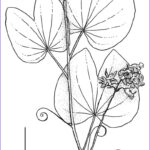 Rainforest Coloring Page New Stock Tropical Rainforest Drawing At Getdrawings