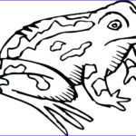 Realistic Fish Coloring Pages Awesome Photos Cute Frog Coloring Pages