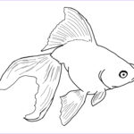 Realistic Fish Coloring Pages Beautiful Images Free Printable Goldfish Coloring Pages For Kids