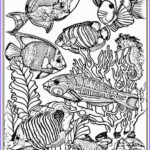 Realistic Fish Coloring Pages Beautiful Photos Coloring Pages Sweet Fish Coloring Pages For Adults