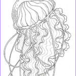 Realistic Fish Coloring Pages Best Of Collection Realistic Jellyfish Free Printable Coloring Page For