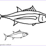Realistic Fish Coloring Pages Best Of Gallery Tropical Fish Coloring Pages