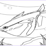 Realistic Fish Coloring Pages Cool Photography Ocean Fish Coloring Pages