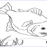 Realistic Fish Coloring Pages Elegant Photography Fish Realistic Coloring Pages