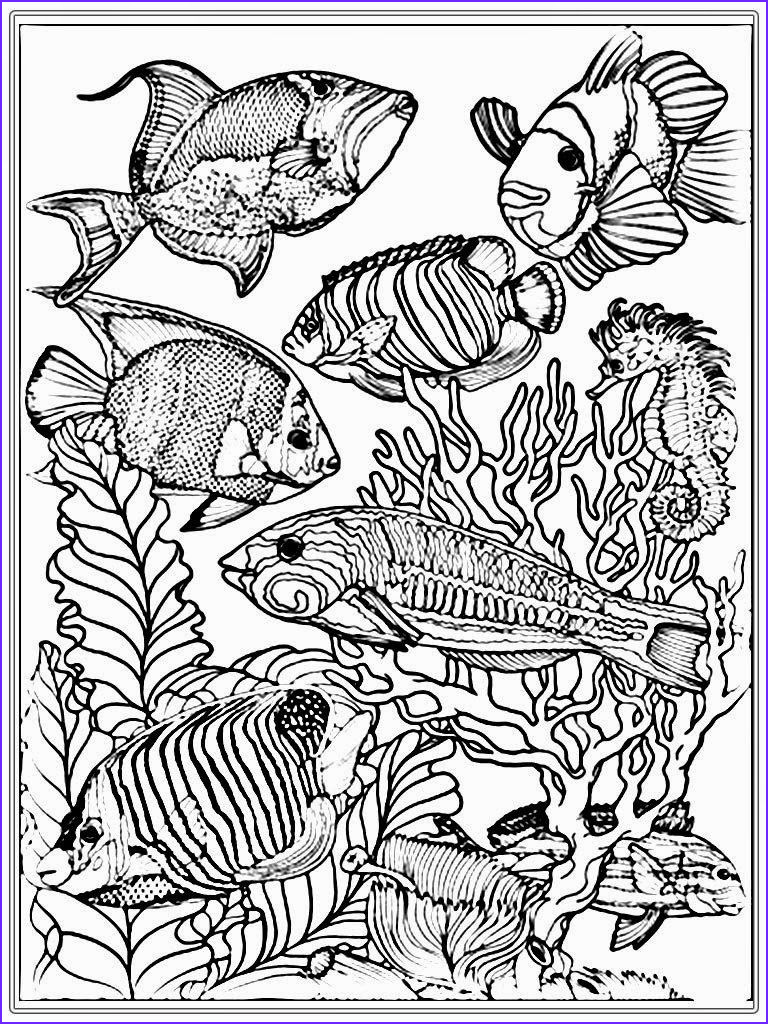 Realistic Fish Coloring Pages Luxury Images Adult Free Fish Coloring Pages