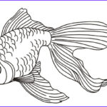 Realistic Fish Coloring Pages Unique Photos 8 Fish Coloring Pages Jpg Ai Illustrator