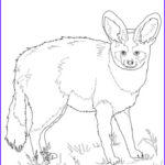 Realistic Fox Coloring Pages Awesome Photos Bat Eared Fox Coloring Page