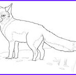 Realistic Fox Coloring Pages Beautiful Gallery Realistic Grey Fox Coloring Page
