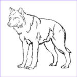 Realistic Fox Coloring Pages Beautiful Photos Realistic Wolf Coloring Pages
