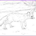 Realistic Fox Coloring Pages Beautiful Stock Curious Fennec Fox Coloring Page