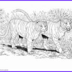Realistic Fox Coloring Pages Best Of Gallery Tiger Coloring Pages And Book
