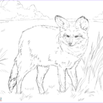 Realistic Fox Coloring Pages Best Of Photos Bat Eared Fox Coloring Page