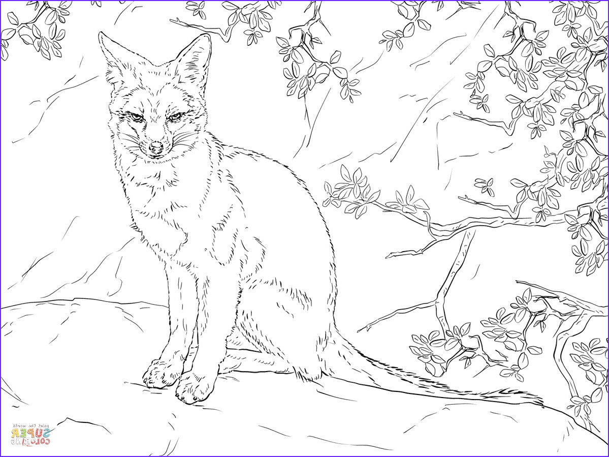 Realistic Fox Coloring Pages Best Of Stock Fennec Fox Realistic Coloring Pages Print Coloring 2019