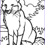Realistic Fox Coloring Pages Cool Photos Animal Coloring Pages