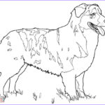 Realistic Fox Coloring Pages Cool Photos Realistic Fox Coloring Pages At Getcolorings