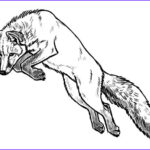 Realistic Fox Coloring Pages Elegant Collection Realistic Fox Coloring Pages