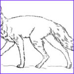 Realistic Fox Coloring Pages Elegant Gallery Coloring Page Music Kids Drawing And Coloring Pages