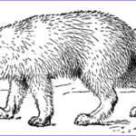 Realistic Fox Coloring Pages Elegant Gallery Realistic Arctic Fox Coloring Page
