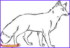 Realistic Fox Coloring Pages Elegant Gallery Realistic Wolf Coloring Pages