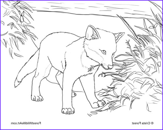 Realistic Fox Coloring Pages Inspirational Photos Realistic Fox Coloring Pages Posted by Crista forest Cute