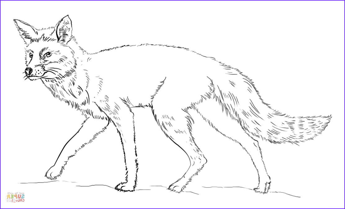 Realistic Fox Coloring Pages Luxury Images Realistic Red Fox Coloring Page