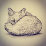 Realistic Fox Coloring Pages Luxury Photography Realistic Fox Drawing At Getdrawings