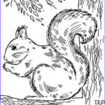 Realistic Fox Coloring Pages New Gallery Realistic Picture Squirrel Coloring Page Download