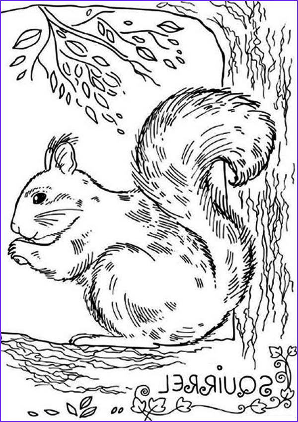 realistic picture of squirrel coloring page