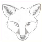 Realistic Fox Coloring Pages Unique Collection Cute Fox Coloring Pages