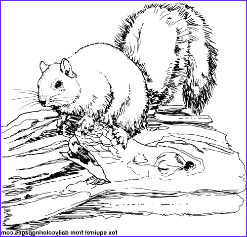 Realistic Fox Coloring Pages Unique Collection Printable 48 Realistic Animal Coloring Pages 3629 Free