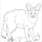 Realistic Fox Coloring Pages Unique Gallery Bat Eared Fox Coloring Page