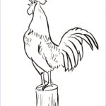 Rooster Coloring Pages Awesome Photos Rooster Coloring Page Samantha Bell