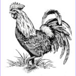 Rooster Coloring Pages Beautiful Stock Rooster Coloring Page Adult Coloring Pages