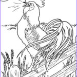 Rooster Coloring Pages Elegant Photos Rooster Drawing Outline At Getdrawings