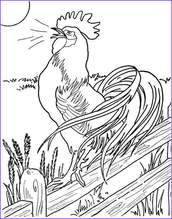 rooster drawing outline