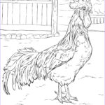 Rooster Coloring Pages Inspirational Photos Brown Leghorn Rooster Coloring Page