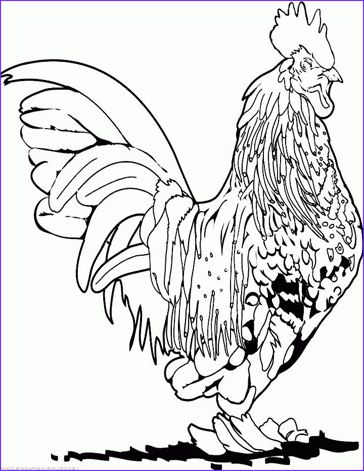 Rooster Coloring Pages New Photography Roosters Coloring Pages and Coloring On Pinterest