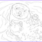 Sea Otter Coloring Page Awesome Gallery 12 Best Sea Otters Images On Pinterest