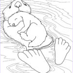 Sea Otter Coloring Page Awesome Photos Sea Ottter With Baby Coloring Page