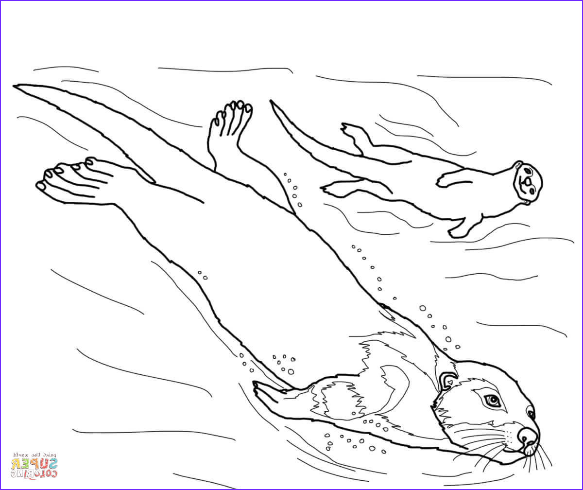 Sea Otter Coloring Page Cool Collection Sea Otter Coloring Page