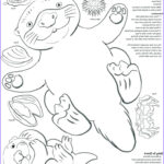 Sea Otter Coloring Page Cool Photography Otter Coloring Pages At Getcolorings