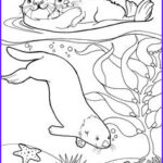 Sea Otter Coloring Page Inspirational Images 12 Best Sea Otters Images