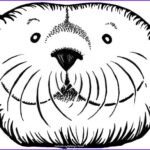 Sea Otter Coloring Page Luxury Photos Carolyndigbyconahan Books