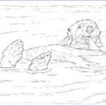 Sea Otter Coloring Page Unique Image Sea Otter Floating Coloring Page