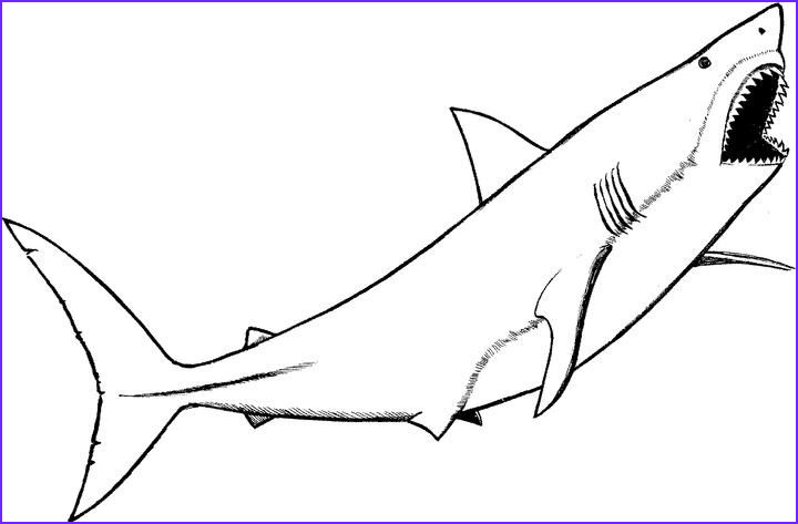 Shark Coloring Book Awesome Photos Prev Next Baby Great White Shark Coloring Pages